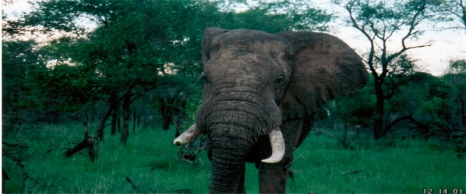 SOUTH AFRICA 2001